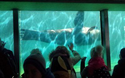 Tretješolci v živalskem vrtu